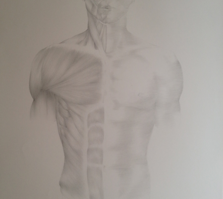 Muscles of the torso, Pencil